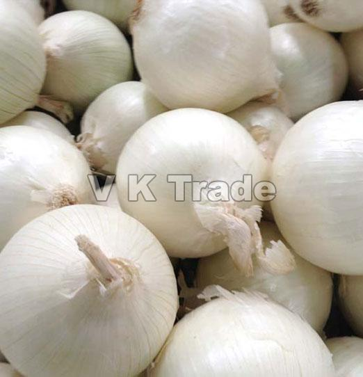 Organic Large White Onion