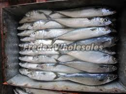 Frozen Horse Mackerel Fish 03