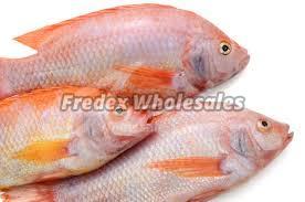 Tilapla Fish