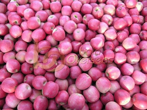 Cripps Pink Apple