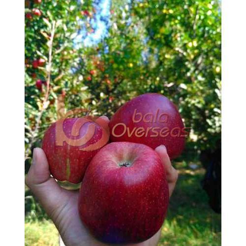 Delicious Fresh Apple
