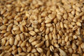 Nutrition Wheat Seeds