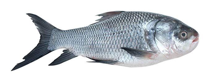 Whole Catla Fish