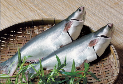 Whole Pangasius Fish