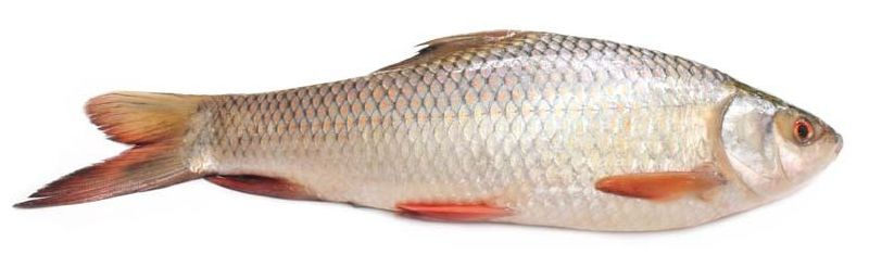 Whole Rohu Fish