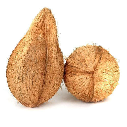 Brown Coconut 01