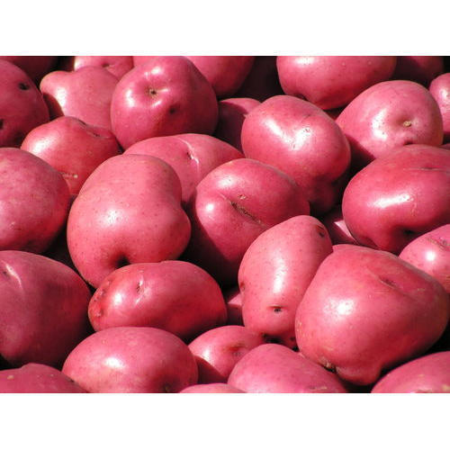 A Grade Red Potato