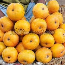 Fresh Rumani Mango
