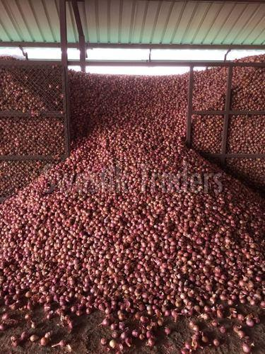 Organic Natural Onion
