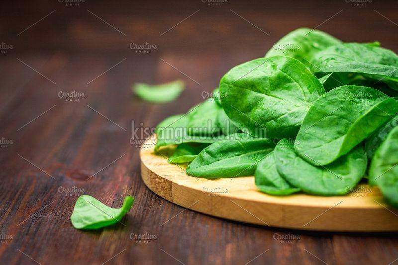 Natural Spinach Leaves