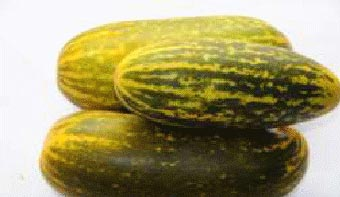 Fresh Celery Cucumber