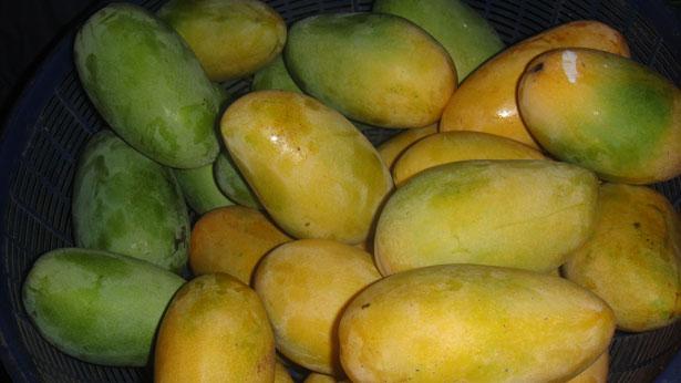 Desi Mango
