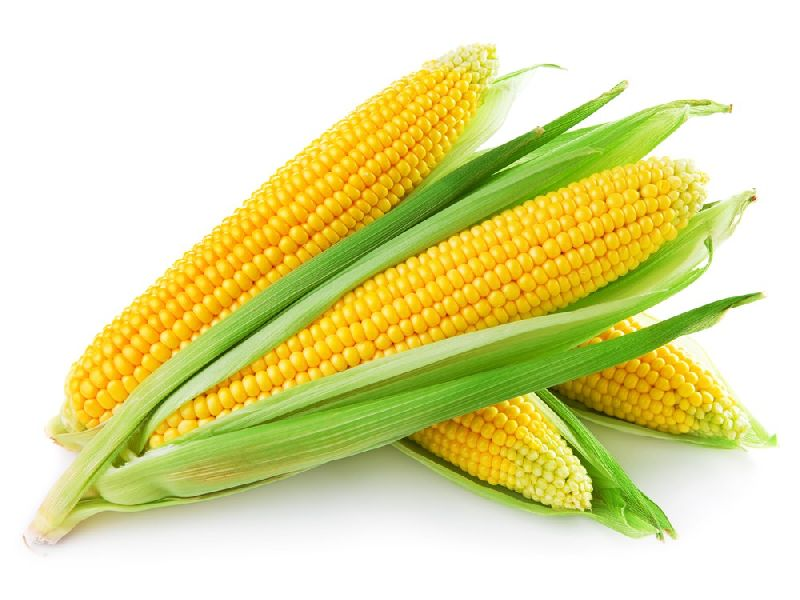 Fresh Yellow Corn