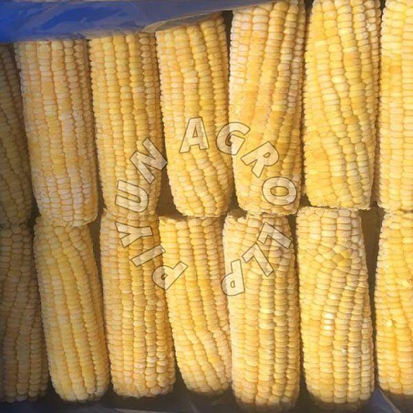 Frozen Sweet Corn Cob