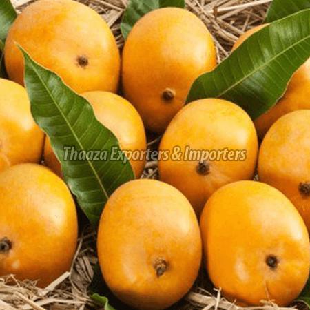 Fresh Alphonso Mango Manufacturer Supplier in Malappuram India