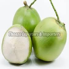 Green Tender Coconut - Manufacturer Exporter Supplier in