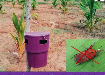 Red Palm Weevil Trap