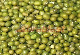 Mung Bean 01
