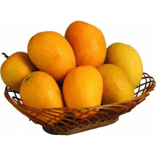 Hapus Mango