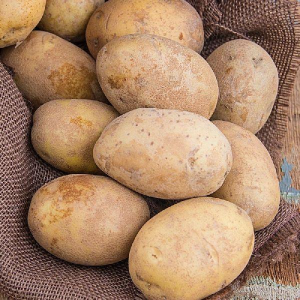 Brown Potato