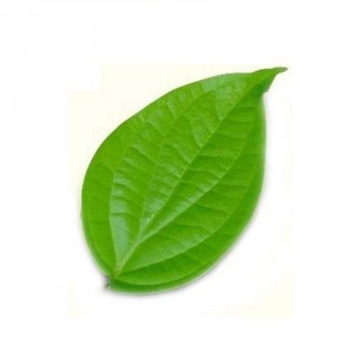 Natural Betel Leaves