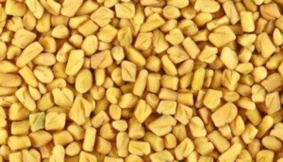 Dried Fenugreek Seeds