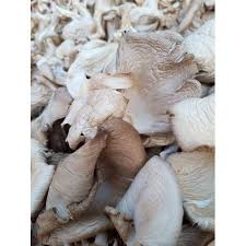 Dried Grey Oyster Mushrooms