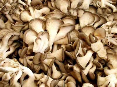 Dried Sajor Kaju Oyster Mushrooms