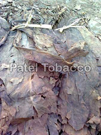 Black Chopadia Tobacco