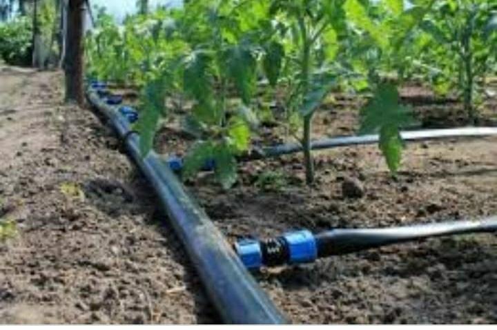 Drip Irrigation Services 04