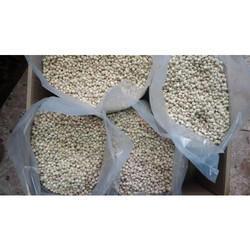Ben Oil Seeds Kernel