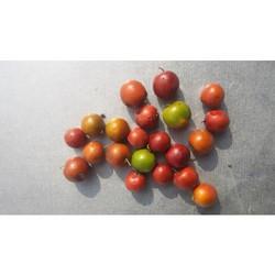 Ziziphus Jujuba Seeds