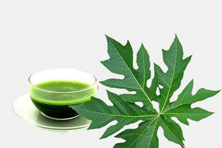 Papaya Leaf Powder