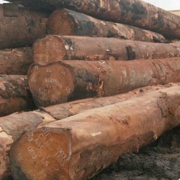 Bubinga Wood Logs