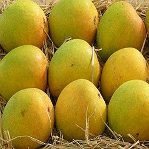 Fresh Ratnagiri Mango