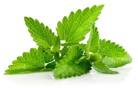 Natural Mint Leaves