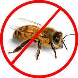Honey bee control