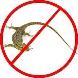 Lizard Catching and control