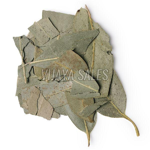 Dry Eucalyptus Leaves