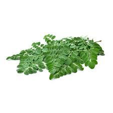 Green Moringa Leaves