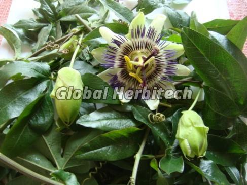 Passiflora Incarnata Tea 01