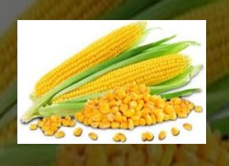 Yellow Corn Maize