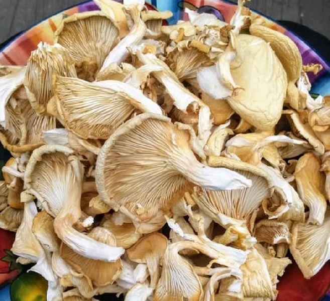 Dry Oyster Mushroom - Manufacturer Exporter Supplier in