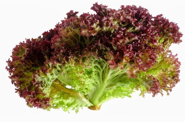 Fresh Lollo Rosso Lettuce