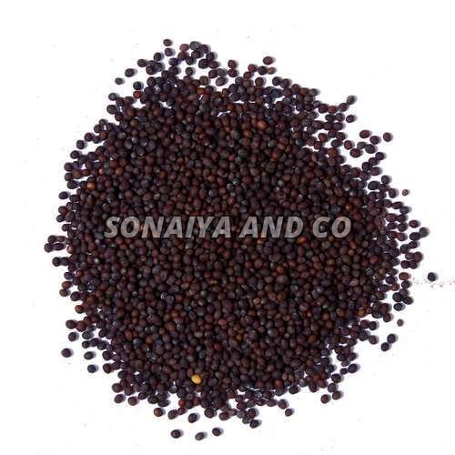 Indian Mustard Seeds