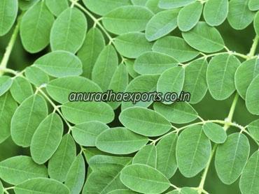 Herbal Moringa Leaves