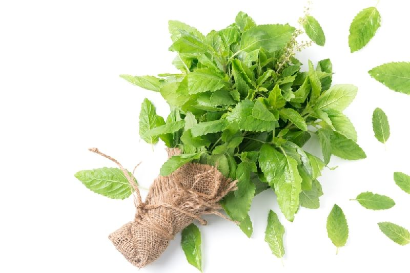 Fresh Tulsi Leaves