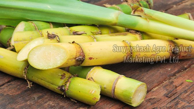 Sugarcane Sticks