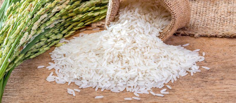 Sona Masoori Raw Rice