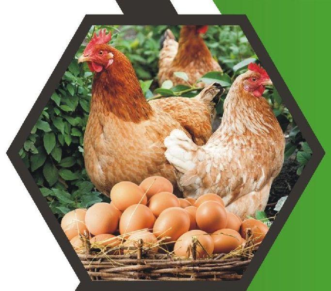 Besto Resp Animal Feed Supplement